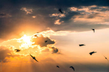 Carl Kruse Blog Birds